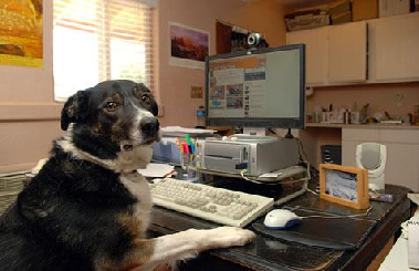 Collie with glasses at Computer